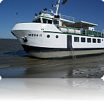 Wega II
